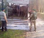 На Волині прикордонники запобігли спробі незаконно переправити коней через кордон