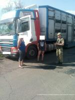 На Луганщині прикордонники затримали біля кордону з Росією вантажівку з 30 коровами та бичками